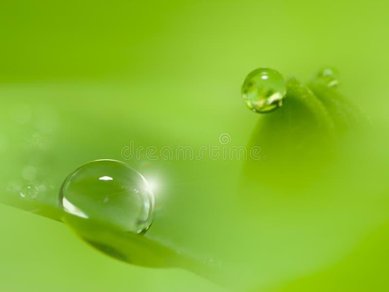 2mm Dauw op groen blad met dalingen van water stock fotografie