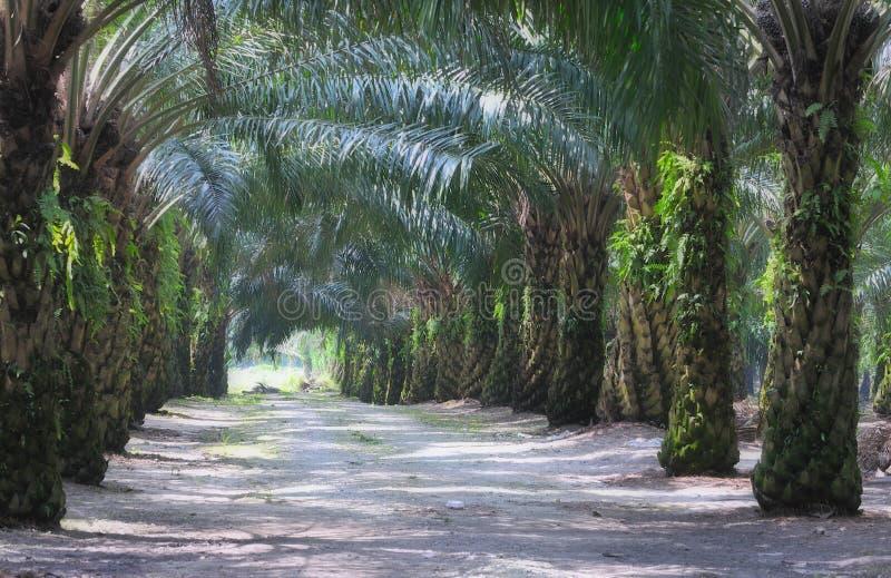 3个庄园油棕榈树系列 库存图片