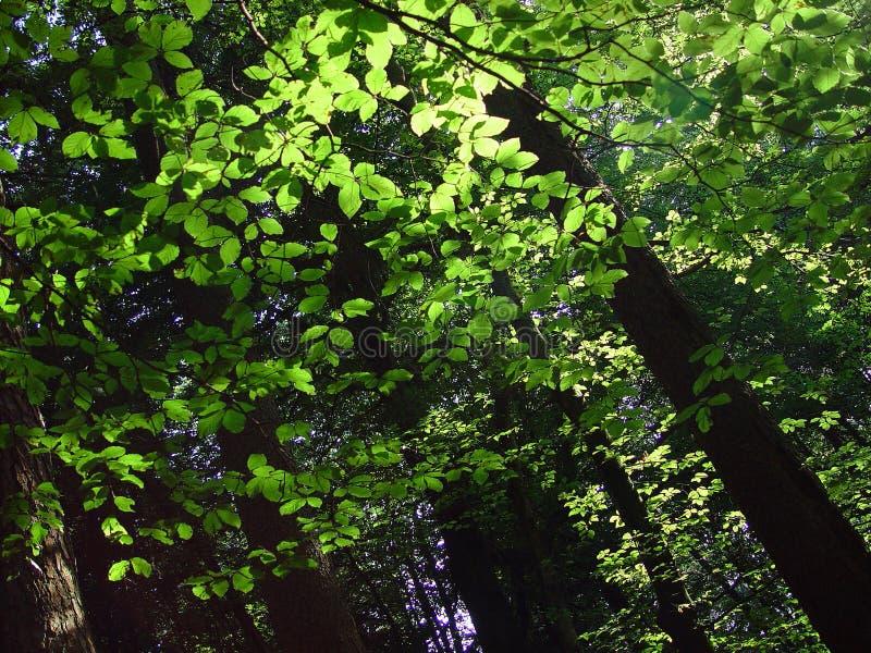 3个森林结构 库存照片
