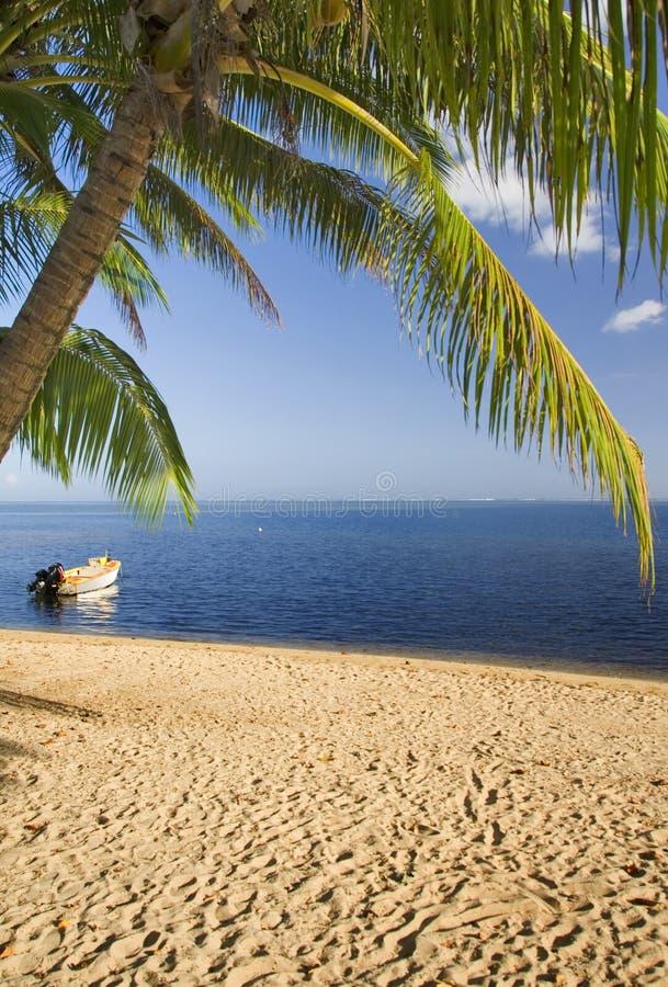 3个椰子moorea结构树 库存照片