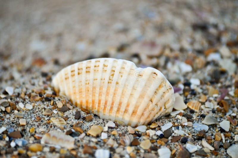 3个海滩海运壳 免版税图库摄影