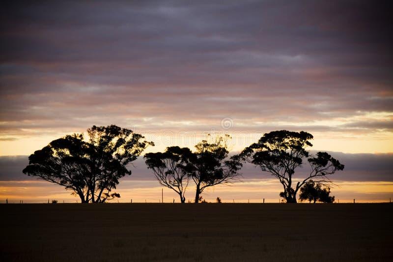 3个现出轮廓的结构树 免版税图库摄影