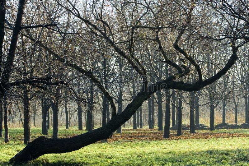3个秋天结构树 库存图片