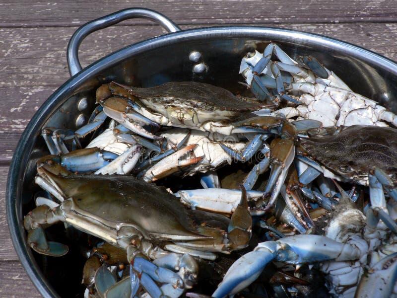 3个青蟹螃蟹居住 免版税库存照片