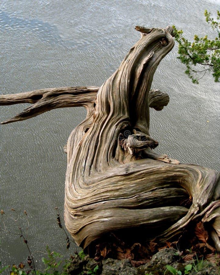 3个颜色dragonwood 库存照片
