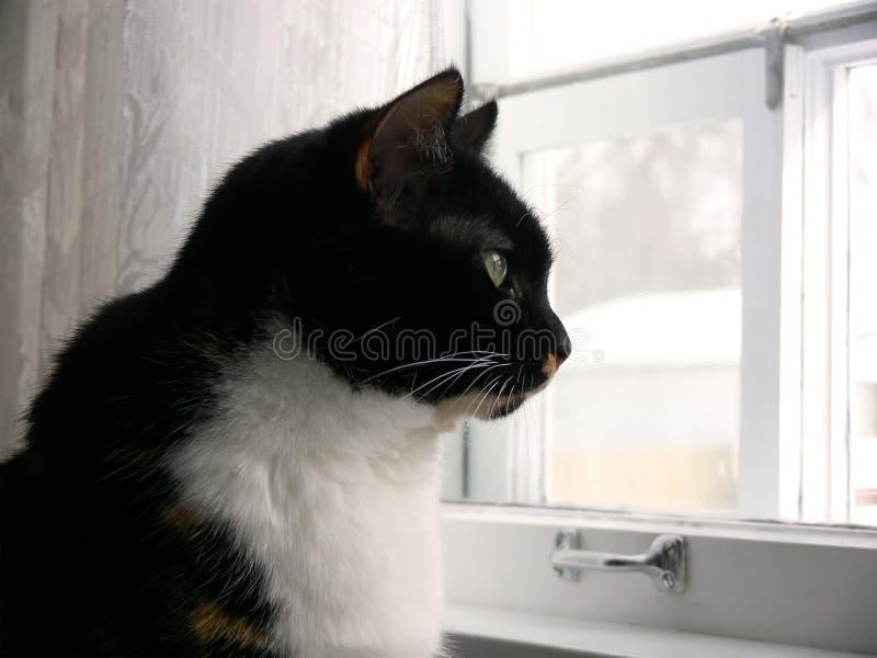 3只猫厨房 库存照片