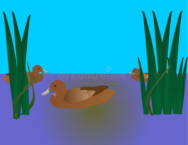 3只鸭子游泳 库存例证