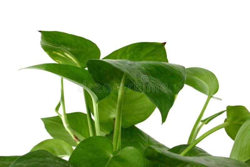 3室内植物 免版税库存图片