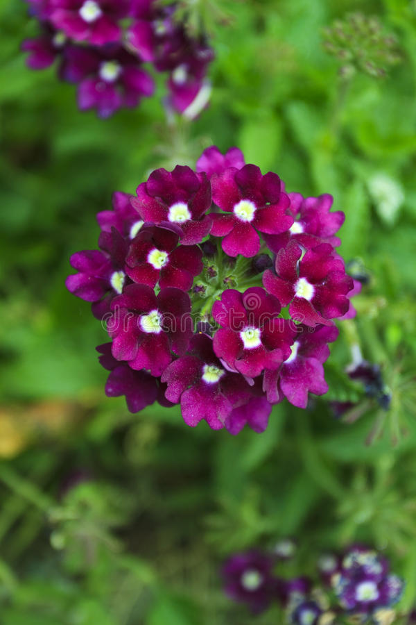 3朵花 库存照片
