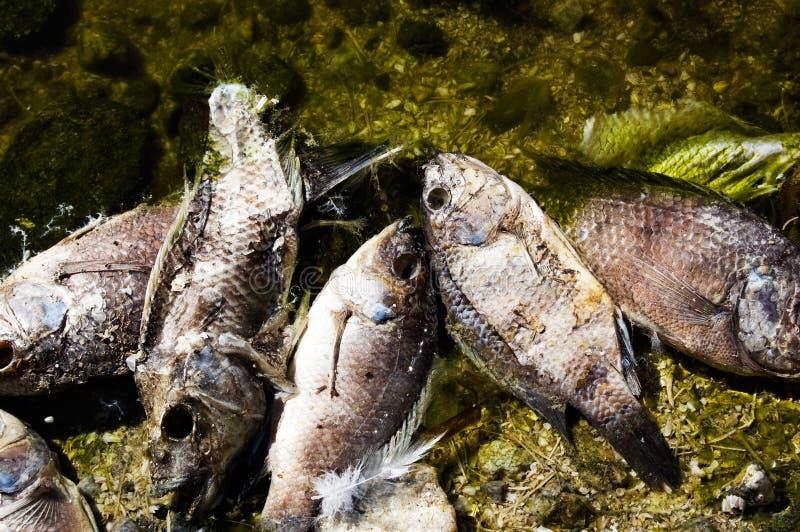 3条停止的鱼salton海运 免版税图库摄影