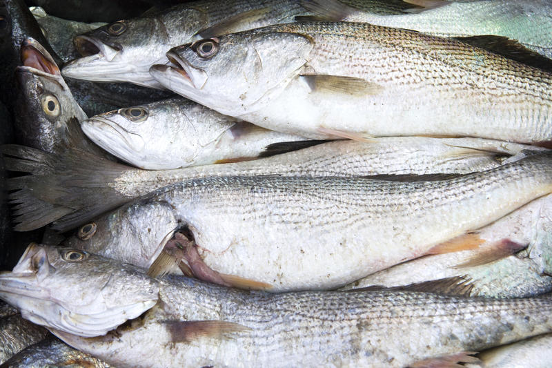 3条鱼销售额 免版税库存图片