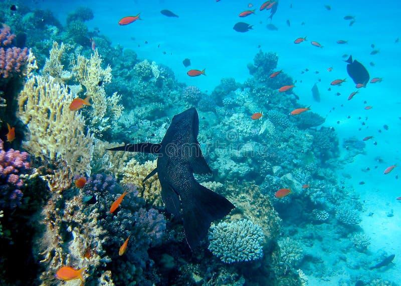 3珊瑚礁 库存图片
