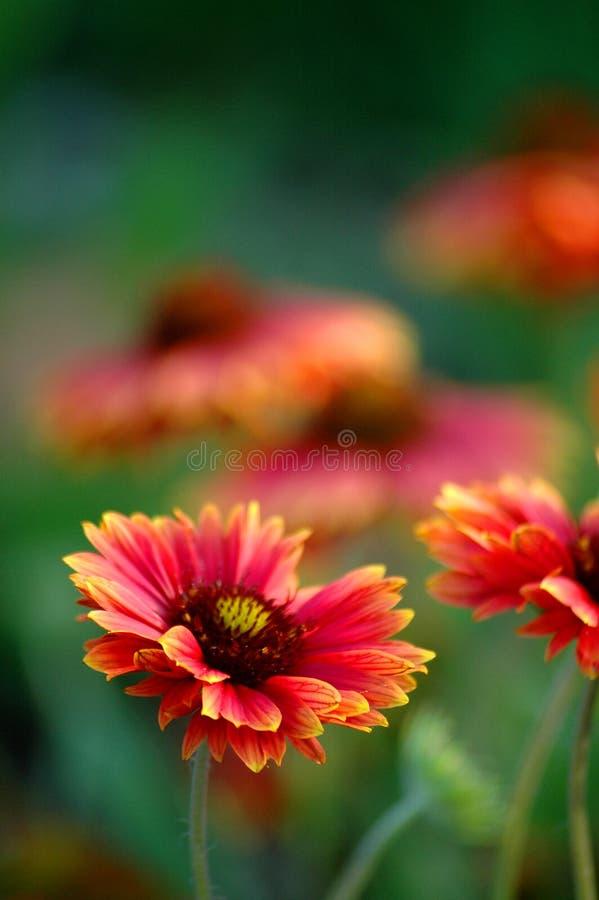 3花卉背景 库存图片