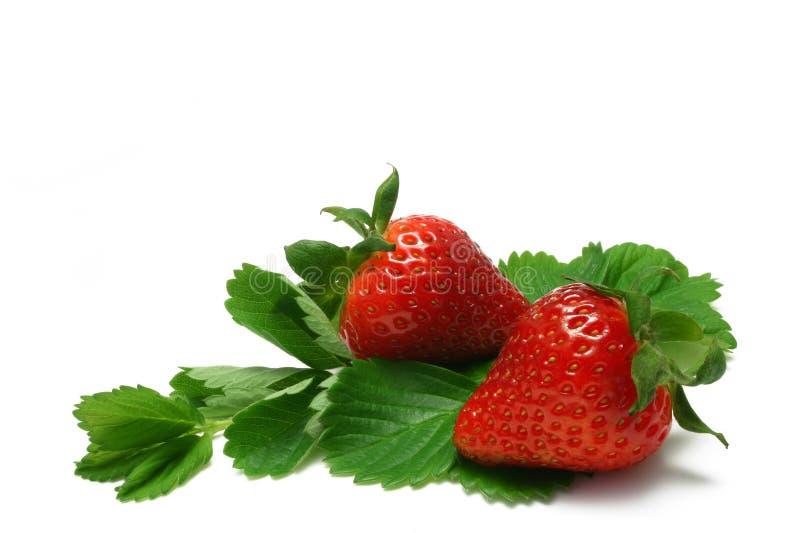 3草莓 免版税库存照片