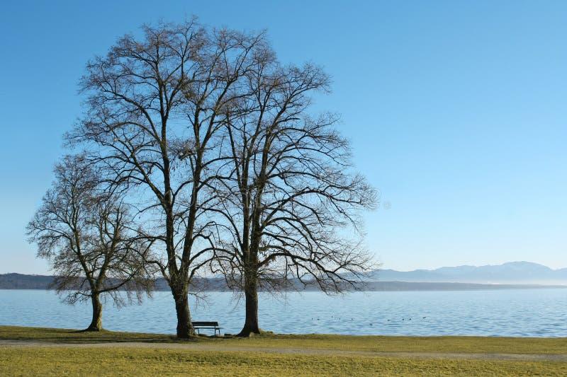 3 árvores no lago imagens de stock royalty free