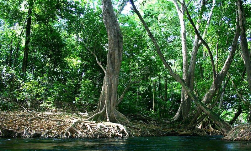 3 κάτω από τον ποταμό στοκ φωτογραφίες