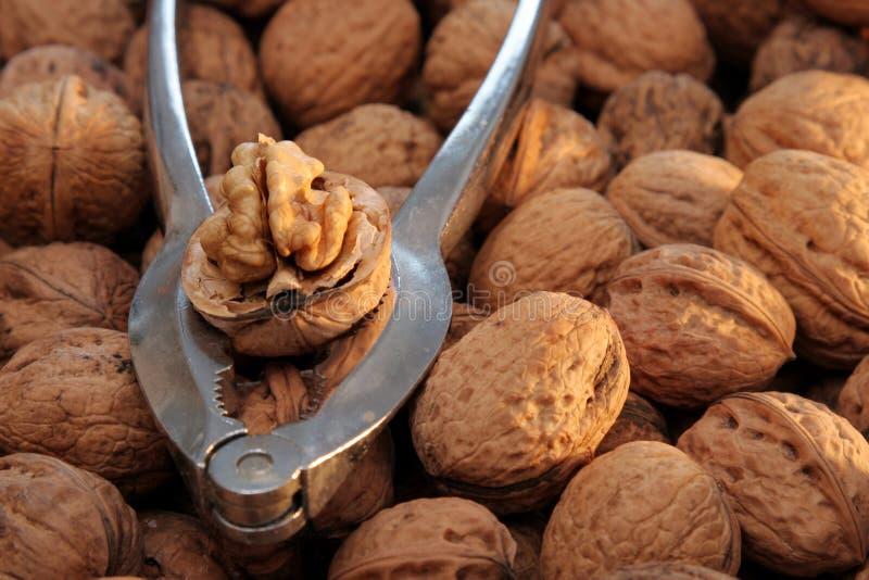 3 грецкого ореха Щелкунчика стоковое фото rf