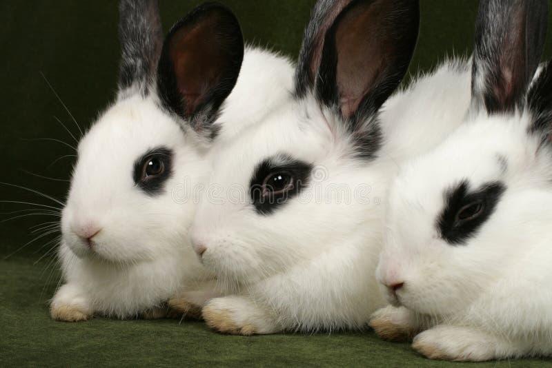 3 кролика стоковая фотография