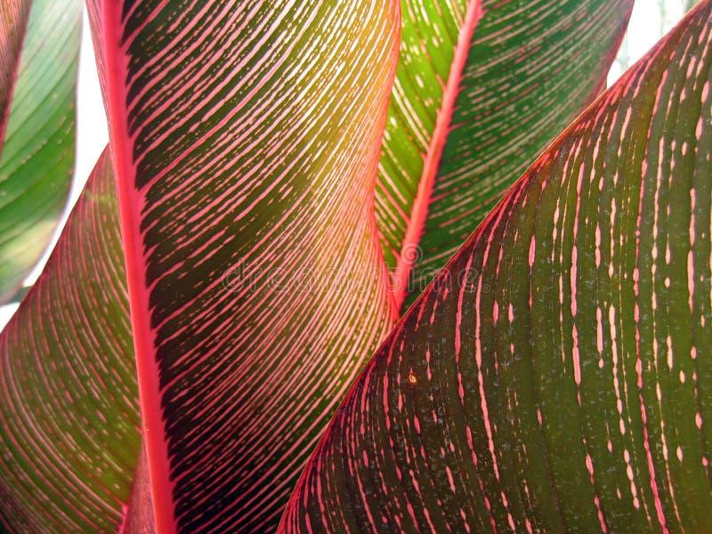 3 поднимающего вверх листьев конца тропических стоковое изображение rf