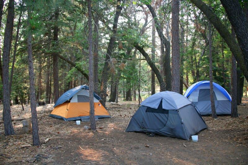 3 шатра setup в сочных древесных зеленях стоковая фотография rf