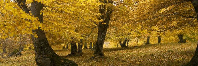 3-ье октября стоковые изображения