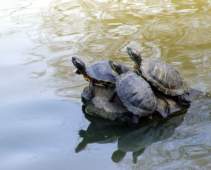 3只乌龟 库存照片
