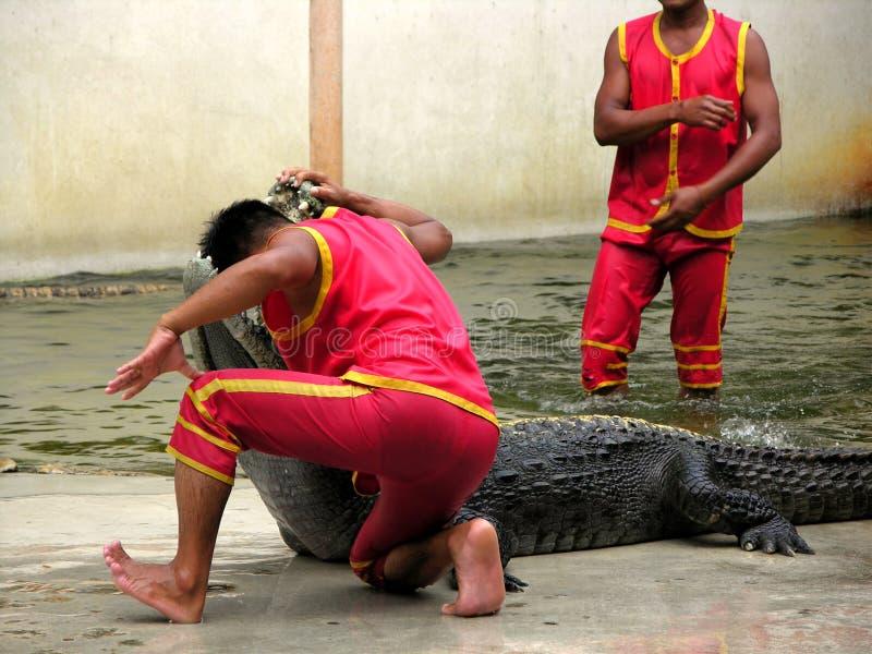 3条鳄鱼农厂samutprakan动物园 免版税库存照片