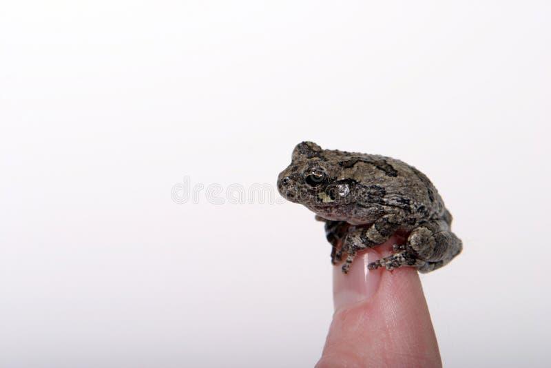 3 żaba Obraz Stock