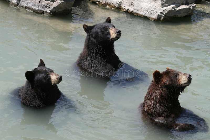 The 3 Bears royalty free stock image