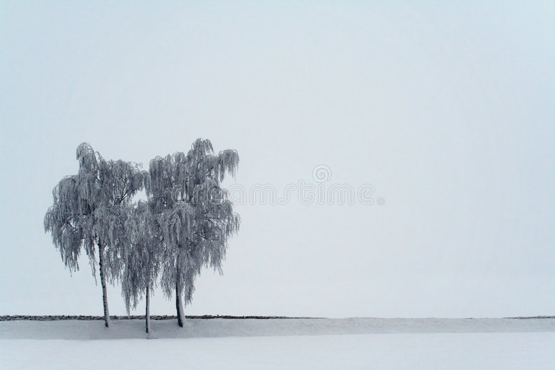 Download 3 Birches Royalty Free Stock Images - Image: 7215109