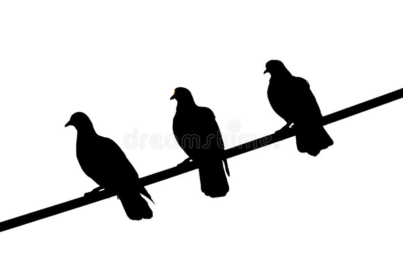 3 Black Birds stock photos