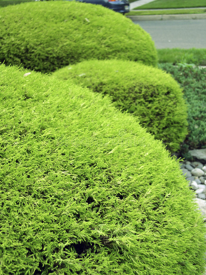 3 bushes in park garden royalty free stock photo