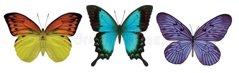3 Butterflies royalty free illustration