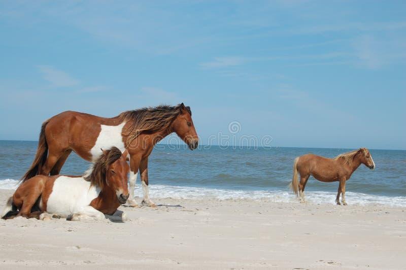 3 caballos salvajes foto de archivo libre de regalías