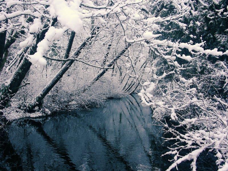 3 Creek Snofall Widok Zdjęcia Royalty Free