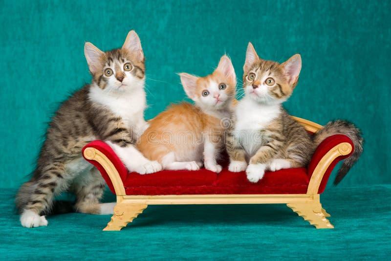 Download 3 Cute Kittens On Mini Sofa Stock Photo - Image: 13177622