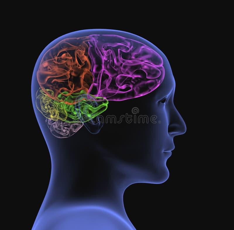 3 d głowy osoby przejrzysty wiązkę x royalty ilustracja