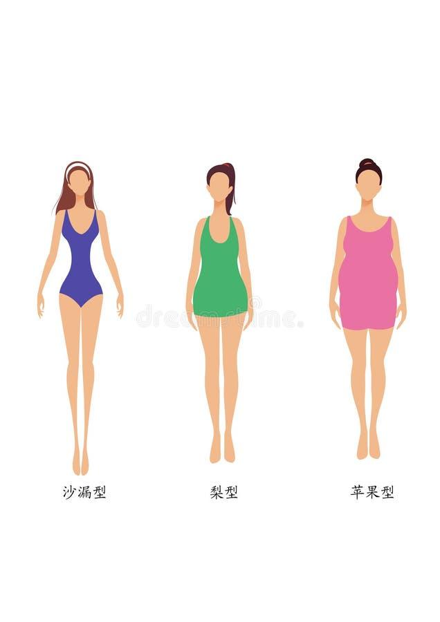 3 dimensiones de una variable de la carrocería de la mujer, delgados, chubbiness y grasa libre illustration