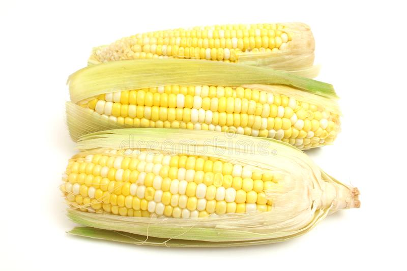 Free Stock Photography  3 Ears Of Corn Picture. Image  2350137 fb2912350e2