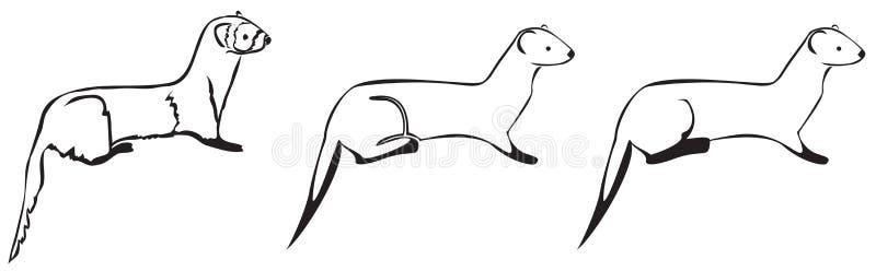 3 furets noirs et blancs illustration stock