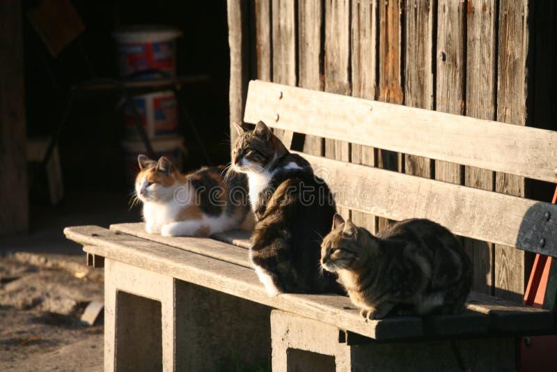 3 gatti immagini stock