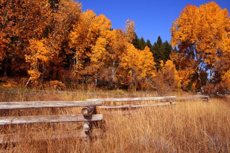 3 jesienią płot obraz stock