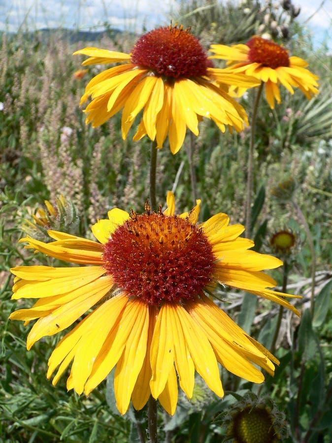 3 kei Wildflowers royalty-vrije stock afbeelding