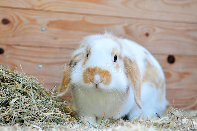 3 królik obraz stock
