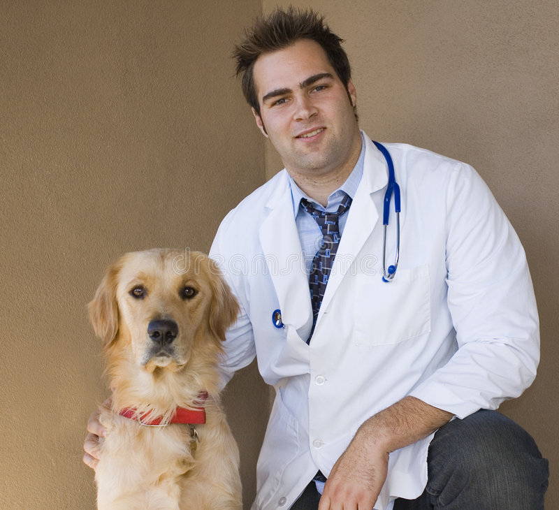3 lekarz weterynarii aporterów zdjęcie stock