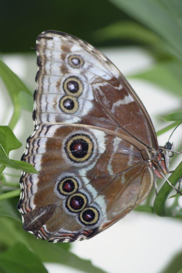 3 motyl obrazy stock