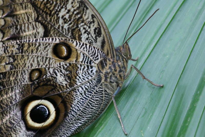 3 motyl obrazy royalty free