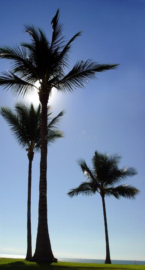 3 palmeras en la playa imagenes de archivo