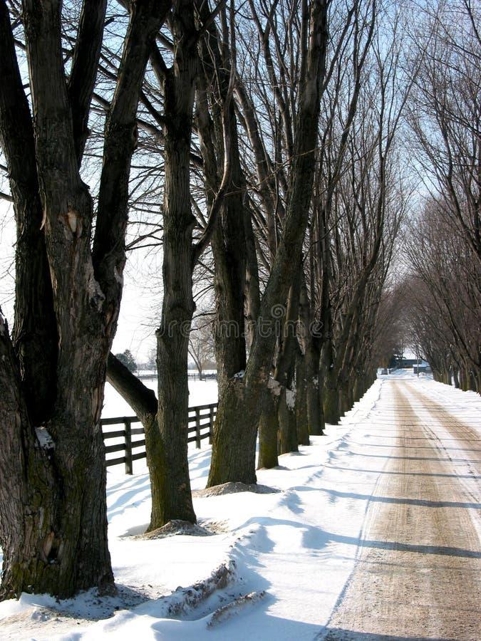 3 pasów ruchu prążkowana zimy drzew obraz royalty free