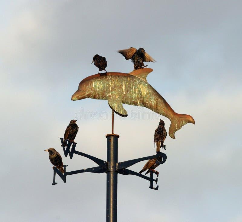 Download 3 pogoda vane. zdjęcie stock. Obraz złożonej z okno, ptaki - 49768